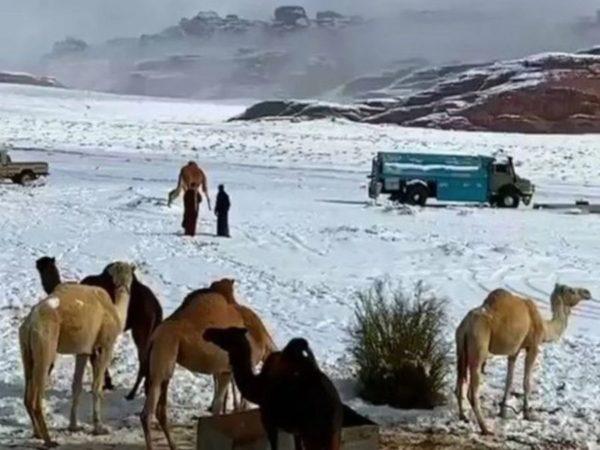Snow on the Sahara? Nevica in Arabia Saudita