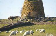 In Sardegna si studierà all'università della Pastorizia