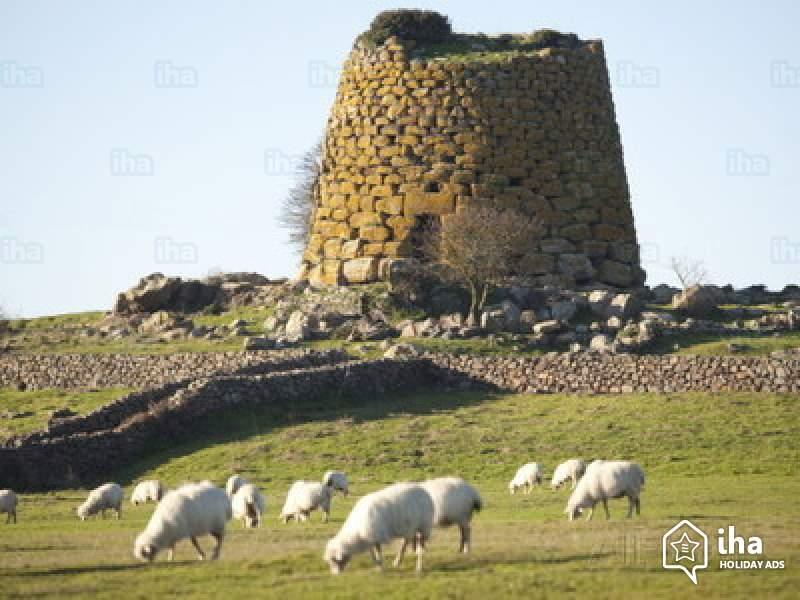 pecore in Sardegna