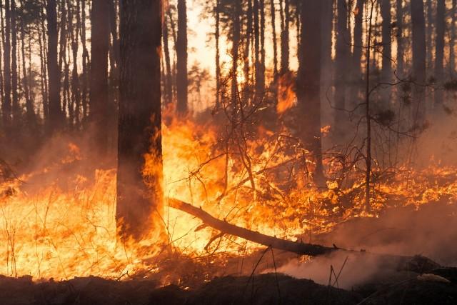 L'uomo distrugge gli ecosistemi e la natura si vendica