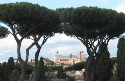 Roma perde pezzi. Ora anche i secolari pini