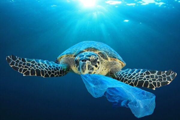Oceano, vita e sostentamento. Ricordiamocelo